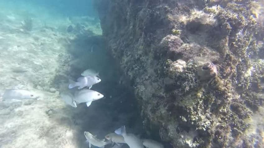 snorkeling-scrub